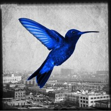 Humming in the city - blue