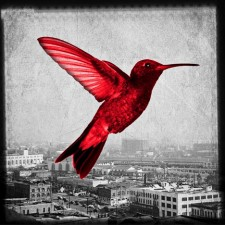 Humming in the city - red