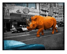 Rhino in Reno - orange