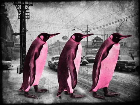 Penguins crossing - pink